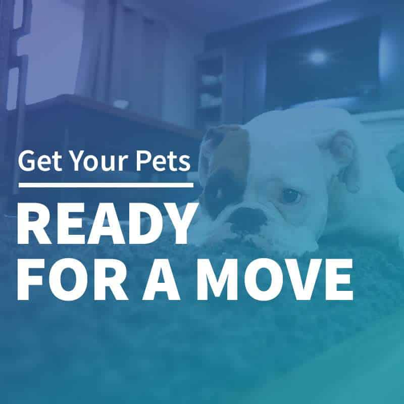 Getting Your Pets Ready for a Move